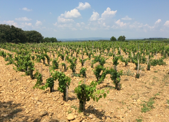 Vineyards in Châteauneuf-du-Pape